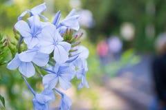 Фиолетовые цветки на весна Стоковые Изображения