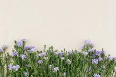 Фиолетовые цветки резца на белой ткани муслина Стоковые Изображения