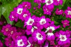 Фиолетовые цветки Стоковые Фото