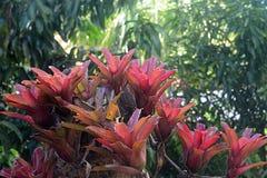 Фиолетовые bromelias, Пуэрто-Рико Стоковая Фотография