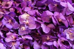 Фиолетовые orhids в букетах на рынке цветка Стоковые Фото