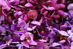 Фиолетовые orhids в букетах на рынке цветка Стоковое Изображение RF