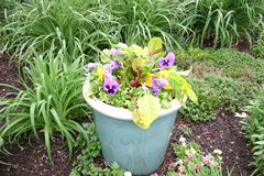 Фиолетовые pansies в баке бирюзы Стоковые Фотографии RF