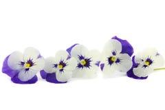 Фиолетовые pansies в камышовой корзине Стоковые Фото