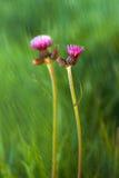 Фиолетовые wildflowers Стоковое Фото
