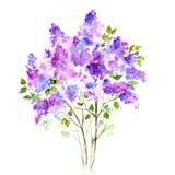 Фиолетовый букет сирени вектор детального чертежа предпосылки флористический Стоковая Фотография RF
