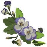 Фиолетовый вектор венка цветка Pansy Стоковое Фото