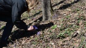 Фиолетовый выбор цветка сток-видео