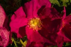 Фиолетовый конец цветка вверх по взгляду field вал Стоковая Фотография
