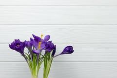 Фиолетовый крокус цветка в листьях бака предпосылка зеленой тычинки pistil листьев белая деревянная Стоковое Изображение RF