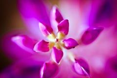 Фиолетовый крупный план Стоковые Изображения