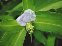 Фиолетовый неизвестный цветок Стоковая Фотография