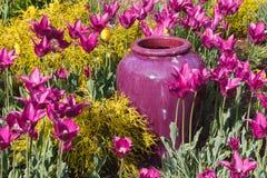 Фиолетовый открытый сад вазы Стоковое фото RF