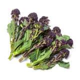 Фиолетовый пуская ростии брокколи Стоковые Фото