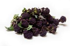Фиолетовый пуская ростии брокколи Стоковое Изображение