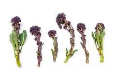 Фиолетовый пуская ростии брокколи Стоковое Изображение RF