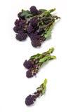 Фиолетовый пуская ростии брокколи Стоковая Фотография RF