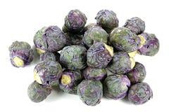 Фиолетовый росток Брюсселя Стоковые Изображения RF
