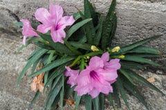 Фиолетовый рост цветка на поле цемента Стоковое Изображение