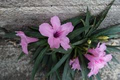 Фиолетовый рост цветка на поле цемента Стоковые Фотографии RF
