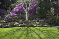Фиолетовый сад весны Стоковая Фотография RF