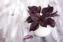 Фиолетовый свежий базилик Стоковое фото RF