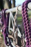 Фиолетовый тэкс лошади на загородке Стоковое Изображение