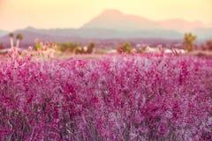 Фиолетовый луг Стоковые Изображения