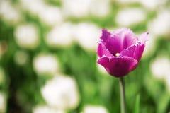 Фиолетовый цветок лета Стоковая Фотография RF