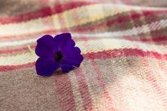 Фиолетовый цветок на шотландке Стоковая Фотография