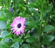 Фиолетовый цветок среди листвы Стоковые Изображения RF