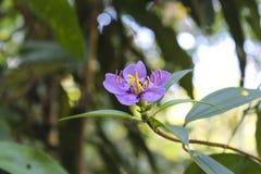 Фиолетовый цветок с муравьями стоковое изображение