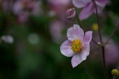Фиолетовый цветок 1 флага Стоковая Фотография RF
