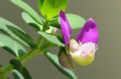 Фиолетовый цветок стоковые фотографии rf