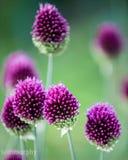 Фиолетовый 4 Стоковые Изображения RF