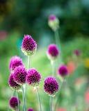 Фиолетовый 3 Стоковая Фотография RF
