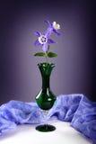 Фиолетовый columbine цветок Стоковые Изображения