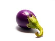 Фиолетовый Solanum. Стоковое Изображение