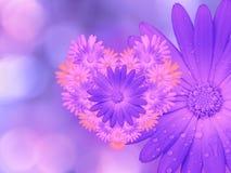 Фиолетов-розовые цветки, на розов-голубой запачканной предпосылке closeup Яркий флористический состав, карточка на праздник колла бесплатная иллюстрация