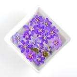 Фиолеты в квадратном смычке стоковое фото rf