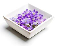 Фиолеты в угле белой вазы низком стоковая фотография rf