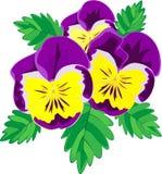 фиолеты фиолетовые Стоковое Фото