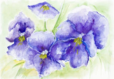 Фиолеты Стоковая Фотография