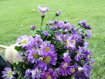Фиолет цветет букет на зеленой лужайке Стоковое Фото