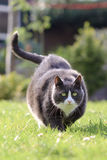 Фитнес кота стоковые фотографии rf