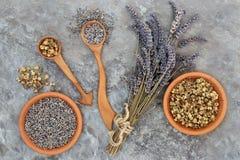 Фитотерапия лаванды и стоцвета стоковое изображение rf