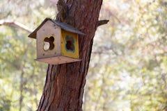 Фидеры для птиц на дереве Стоковые Изображения RF