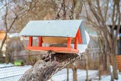 Фидер дома птицы Стоковое фото RF