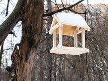 Фидер птицы на ветви дерева в городском парке в зиме Стоковое Фото