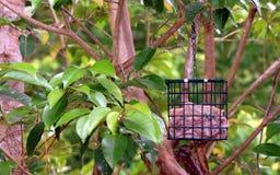 Фидер птицы ожидая птицы Стоковые Изображения RF